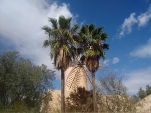 November in the Montessori School of Mallorca